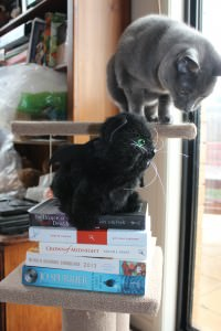 Smokey and Edgar Allan Purr with items received