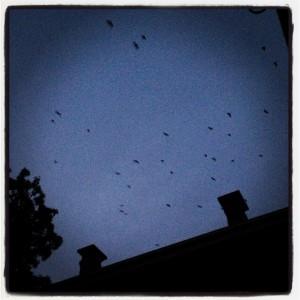 The bats arrive to set the mood