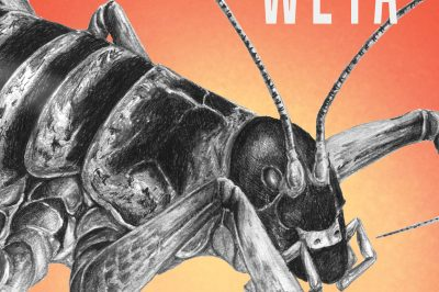 stone weta - a bug is prominent between the title and author's name